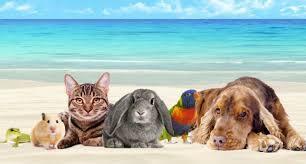 Tatile Giderken Evcil Hayvanlar